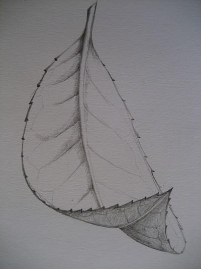 Foreshortenend leaf